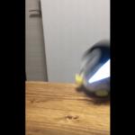 【ペンタコ】ペンちゃんライトセーバーでご乱心 / PenTako – Penchan going mad